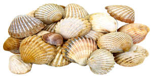 L'hécatombe des coquillages
