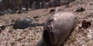 Les poissons retrouvés morts auraient été victimes d'asphyxie