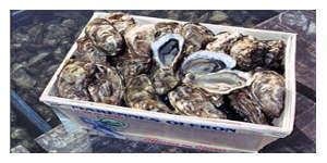 Une pétition contre les huîtres de laboratoire