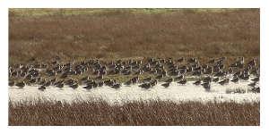 Zones humides : la réserve naturelle du Marais d'Yves