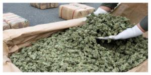 Près de 600 kilos de résine de cannabis saisis sur l'A10