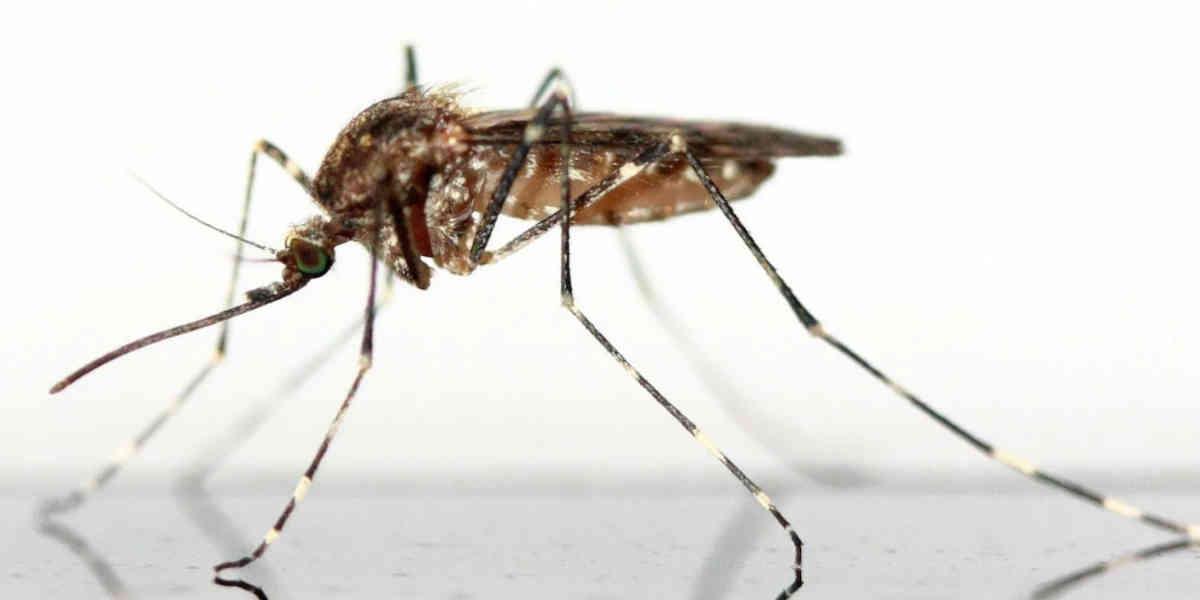 La prolifération des mouches et moustiques en Charente-Maritime